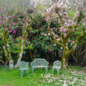 Endicott Gardens sitting under the beautiful Magnolia trees! - <p>Relax in one of our many garden areas- featured here is our beautiful pink Japanese Saucer Magnolias!</p>